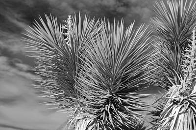 Black Cactus Photograph - Cactus In Black And White by Twenty Two North Photography