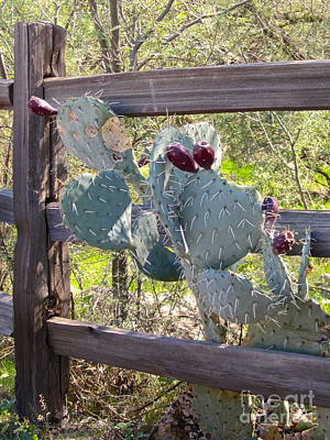 Photograph - Cactus In Bloom by Suzanne Oesterling