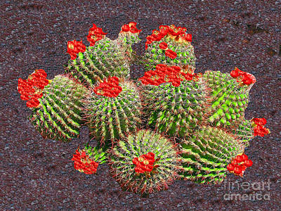 Photograph - Cactus In Bloom Tucson Az by Merton Allen