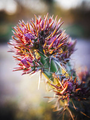 Photograph - Cactus In Spring Bloom by Anthony Citro