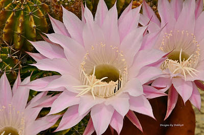 Photograph - Cactus In The Backyard by Debby Pueschel