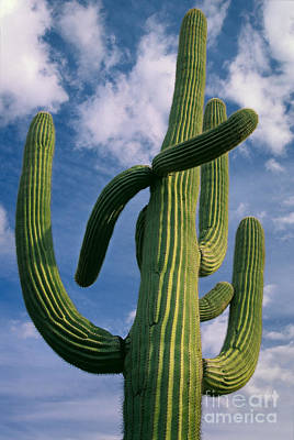 Cactus In The Clouds Art Print by Inge Johnsson