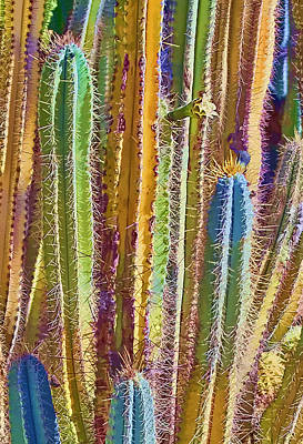 Unusual Photograph - Cactus by Marcia Colelli