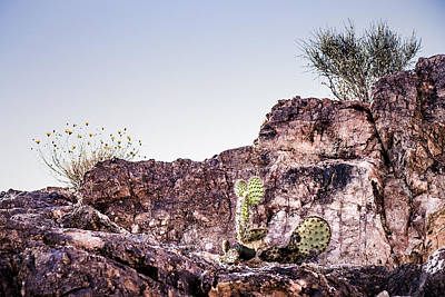 Photograph - Cactus On A Cliff by  Onyonet  Photo Studios