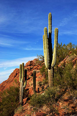 Photograph - Cactus On Camelback II by Daniel Woodrum
