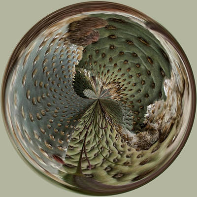 Photograph - Cactus Orb by Wes and Dotty Weber
