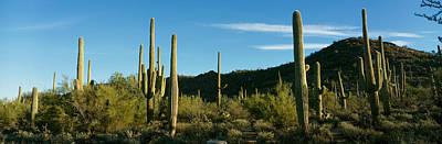 Cactus Art Print by Panoramic Images