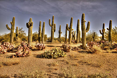 Lenz Wall Art - Photograph - Cactus Patch by George Lenz