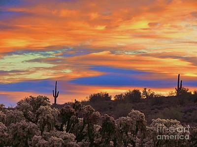 Photograph - Cactus Patch Sunrise by Mistys DesertSerenity