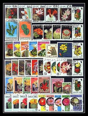 Photograph - Cactus Postage Stamps by Renee Trenholm