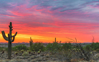 Photograph - Cactus Punch by Stacy LeClair