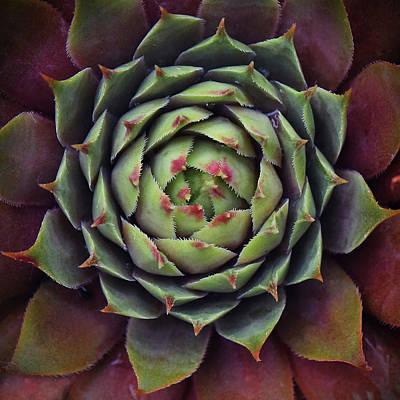 Photograph - Cactus Rhythm by Jaki Good Photography - Celebrating The Art Of Life