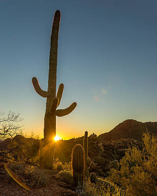 Photograph - Cactus Salida Del Sol  by Chris Bordeleau