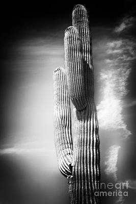 Photograph - Cactus Spoltlight by John Rizzuto