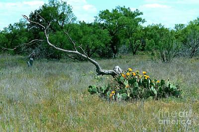 Photograph - Cactus Still Life by Linda Cox