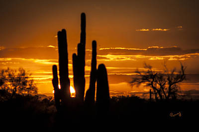Photograph - Cactus Sunset by Penny Lisowski