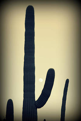 Photograph - Cactus Wave by Christopher Rees