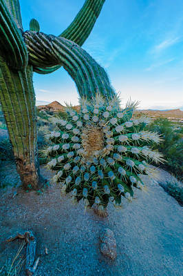 Photograph - Cactus With A Twist by Paul Johnson