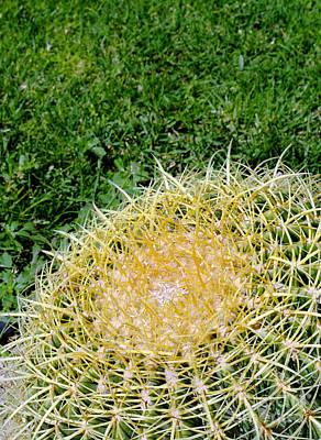 Moody Trees - Cactus with grass by Antony McAulay