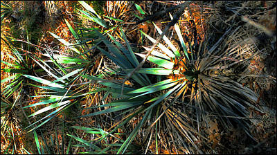 Photograph - Cactuscomp3 2009 by Glenn Bautista