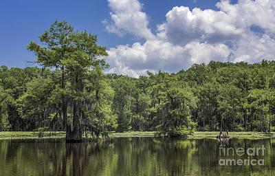 Photograph - Caddo Cypress by David Cutts