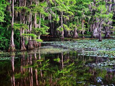 Photograph - Caddo Dawn by Skip Hunt
