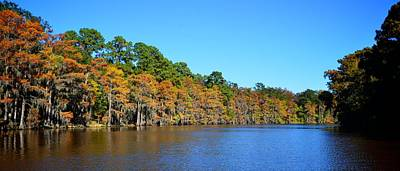 Caddo Lake 1 Art Print