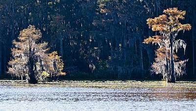 Photograph - Caddo Lake 2 by Ricardo J Ruiz de Porras