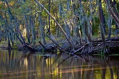 Photograph - Caddo Lake 32 by Ricardo J Ruiz de Porras