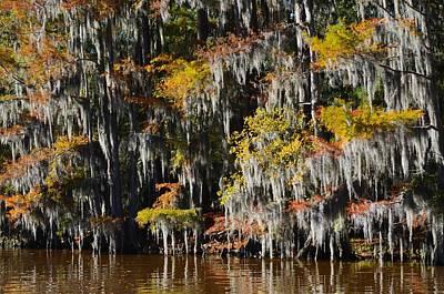 Photograph - Caddo Lake 4 by Ricardo J Ruiz de Porras