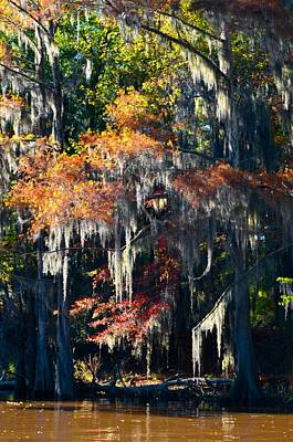 Caddo Lake 40 Art Print