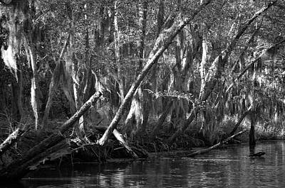 Photograph - Caddo Lake 42 by Ricardo J Ruiz de Porras