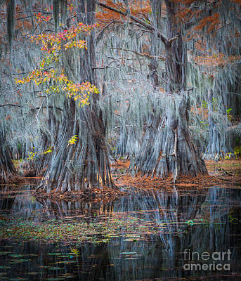 Lilies Royalty-Free and Rights-Managed Images - Caddo Lake Fall by Inge Johnsson