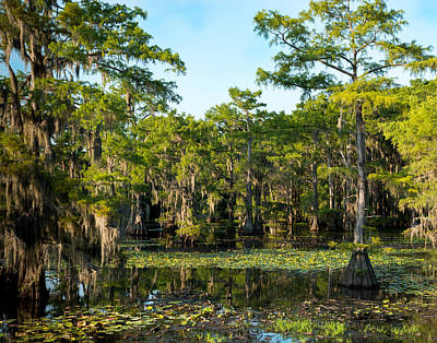 Landscape Photograph - Caddo Lake Lost World by Geoff Mckay