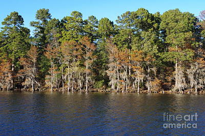 Fine Dining - Caddo Lake Scenic by Gary Richards