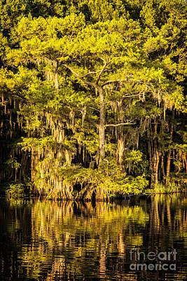 Photograph - Caddo Lake Shore II by Tamyra Ayles