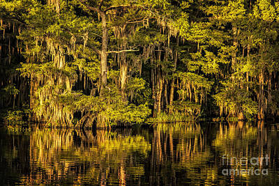 Photograph - Caddo Lake Shore by Tamyra Ayles