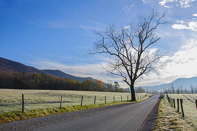 Photograph - Tree On A Frosty Morn by Marilyn Carlyle Greiner