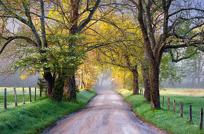 Nighttime Street Photography - Cades Cove Great Smoky Mountains National Park - Sparks Lane by Dave Allen