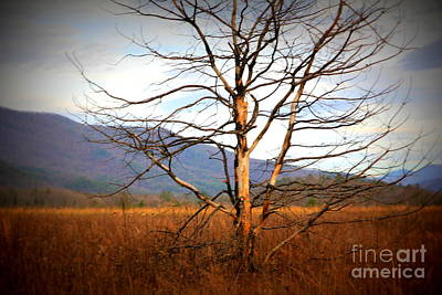 Photograph - Cades Cove Pasture by Cynthia Mask