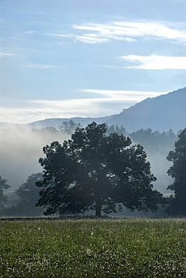 Photograph - Cades Cove Tree  by Carol Erikson