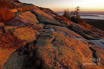Photograph - Cadillac Mountain Acadia by Cindy McIntyre