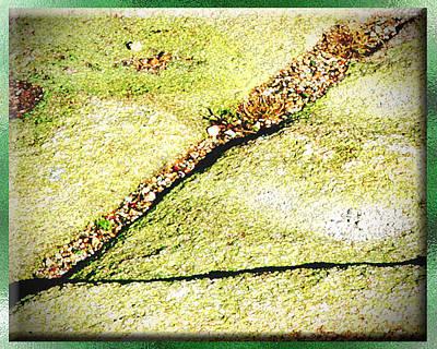 Maine Mountains Digital Art - Cadillac Mountain Lichen by Monzo Rock