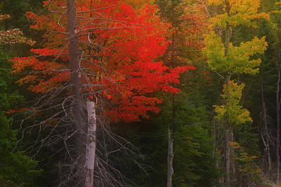 Photograph - Cadmium Red Of Autumn by Jim Vance