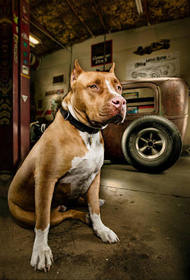 Red Nose Photograph - Caesar At Millers Chop Shop by Yo Pedro