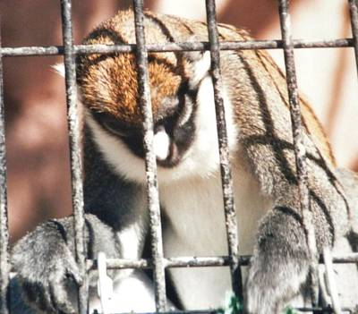 Photograph - Caged But Strong by Belinda Lee