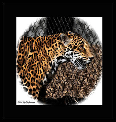 Caged Jaguar Art Print