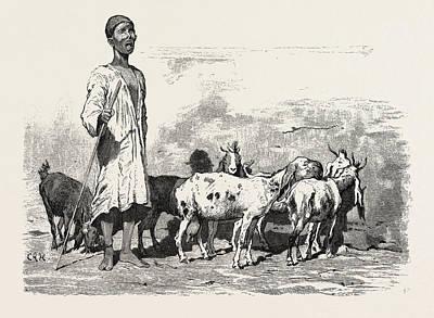 Cairene Milkman.  Egypt Art Print by Litz Collection