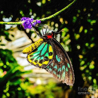 Cairns Birdwing Original
