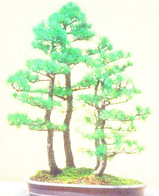 Painting - Caitlin Elm Bonsai Tree by Marian Cates